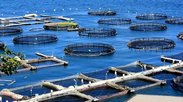 Fish farming is not an efficient way of producing protein